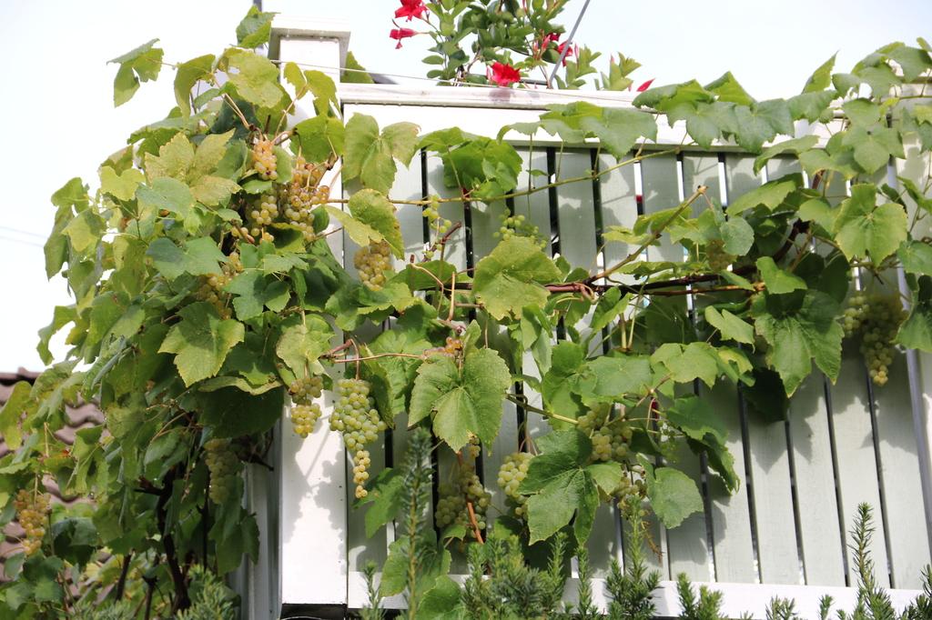 Vindruvor på balkongen
