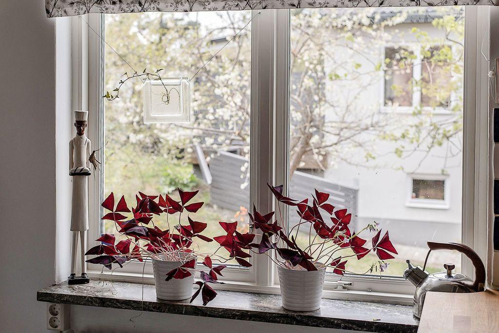 Fönster i kök