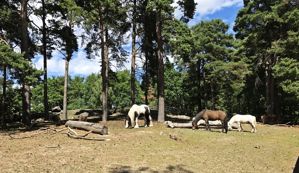 Aspuddensparkens hästar