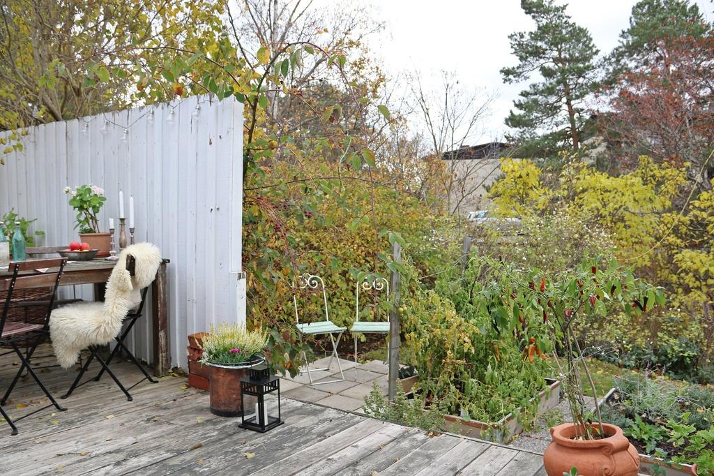 Liten trädgård med odling
