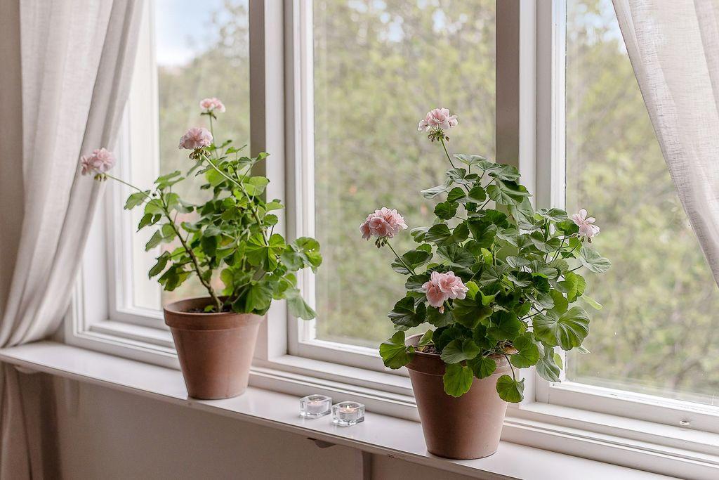 Vardagsrumsfönstret