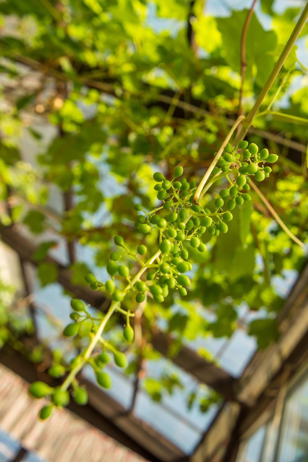 Trädgårdsgatan 43