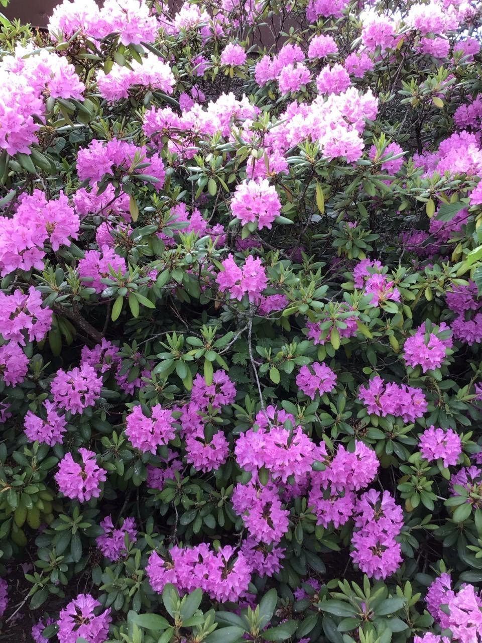 Vackra blommor i trädgården