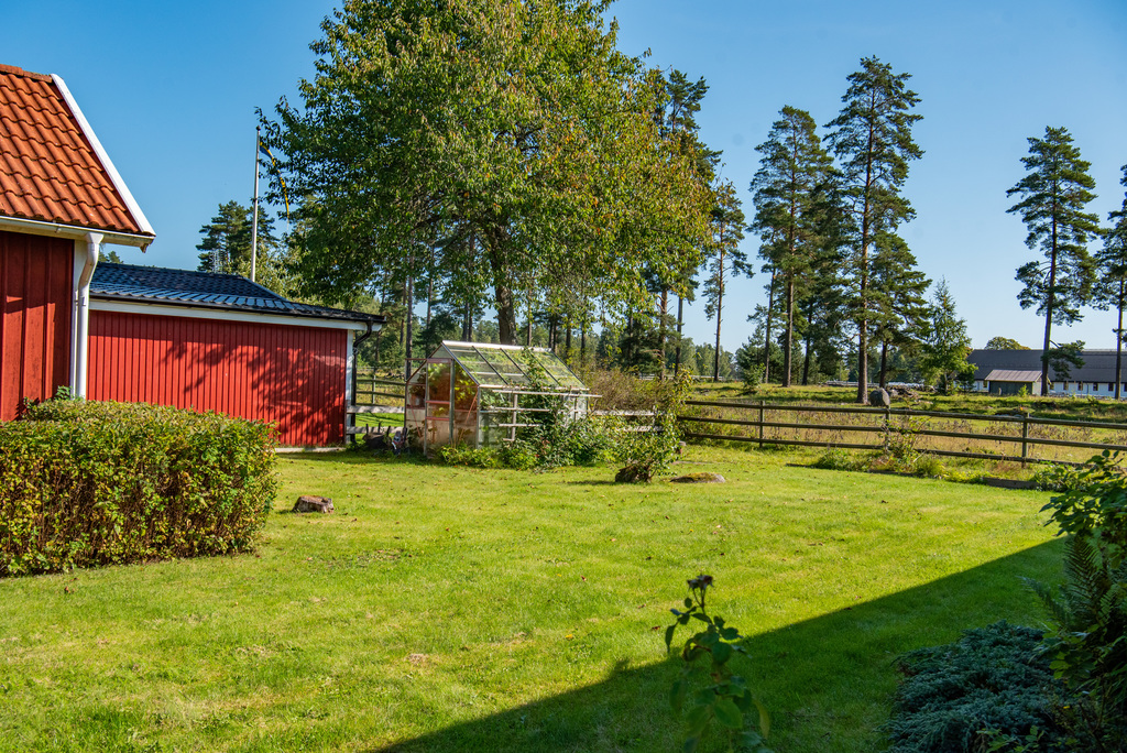 Trädgård med växthus